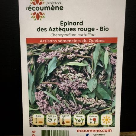 Écoumène - Epinard des Aztèques rouge - Bio (300 semences)