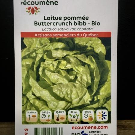 Écoumène - Laitue pommée Buttercrunch bibb - Bio (400 semences)