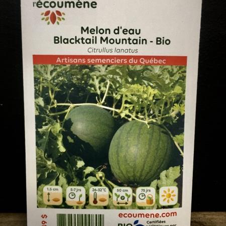 Écoumène - Melon Blacktail Mountain - Bio (25 semences)