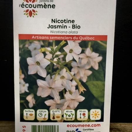 Écoumène - Nicotine Jasmin - Bio (200 semences)